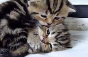 Клип Анна Плетнева «Винтаж» - В мире животных, 2019 - смотрите видео онлайн