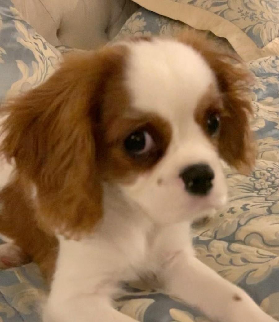 Владимир Пресняков пообщался со щенком на собачьем языке. Забавная реакция щенка